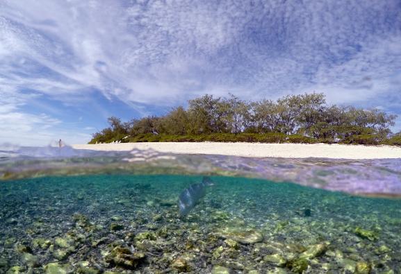La Grande barrière de corail et l'île de Lady Elliot, en Australie, le 9 juin 2015.