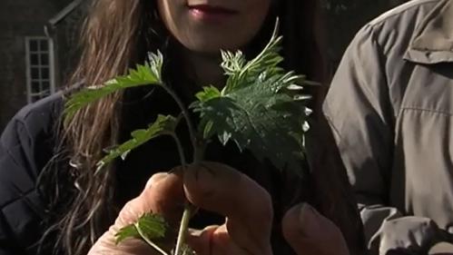 Santé : ces plantes qui vous font du bien