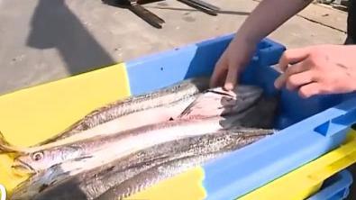 Pêche : sortie de crise pour la filière en France