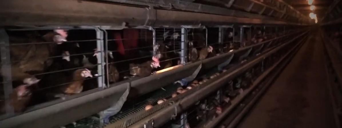 arrêter datant porcs moyen le plus sûr pour raccorder des câbles de cavalier
