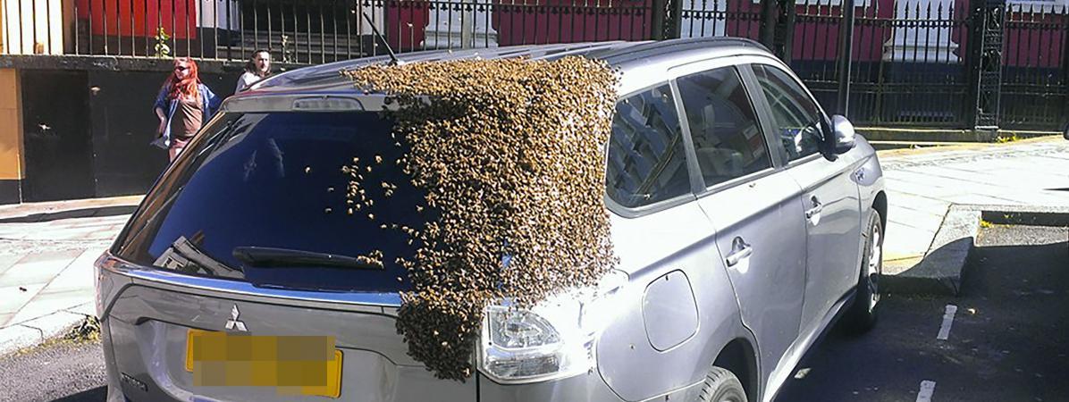video des milliers d 39 abeilles recouvrent une voiture la recherche de leur reine. Black Bedroom Furniture Sets. Home Design Ideas