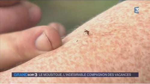 Les moustiques prospèrent en France