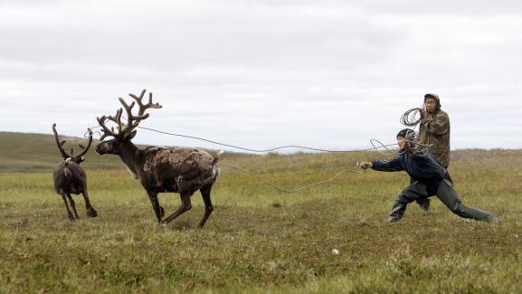 Des éleveurs de rennes, dans la péninsule deIamal, en Sibérie (Russie), le 2 août 2009.