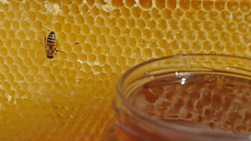 Miel : une production française en crise