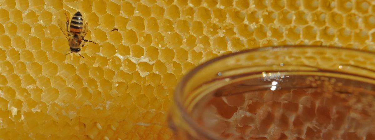 apiculteur fos sur mer