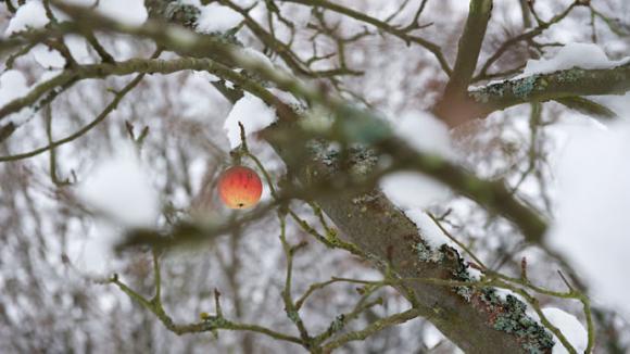 Arbres fruitiers un traitement bio pour l 39 hiver - Traitement des arbres fruitiers ...
