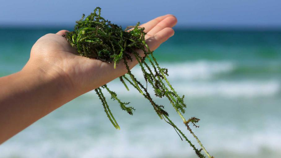 Mettre des algues dans son compost - Quand mettre du fumier dans son jardin ...