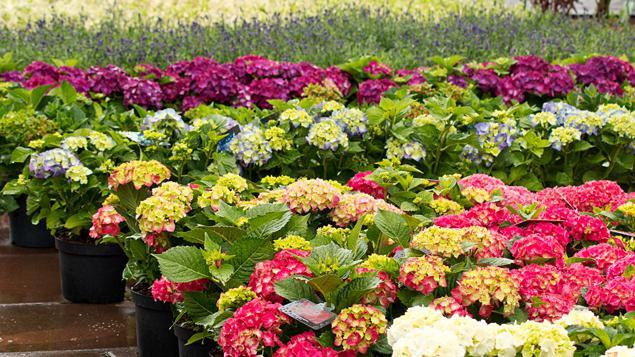 Gamm vert le jardinage un produit de crise for Produit de jardinage