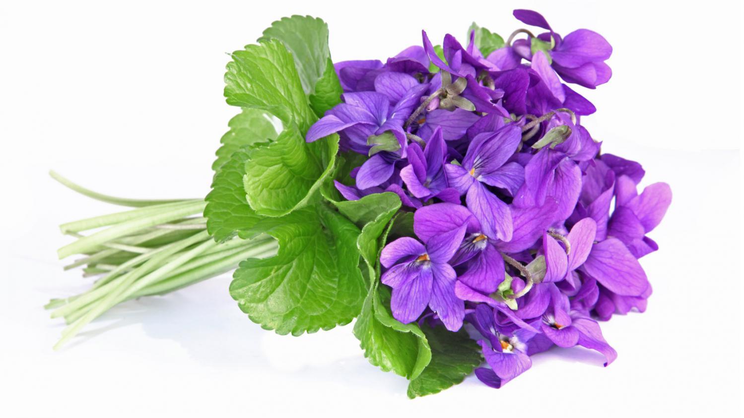 Une fleur de saison la violette comestible et d corative - Image fleur violette gratuite ...