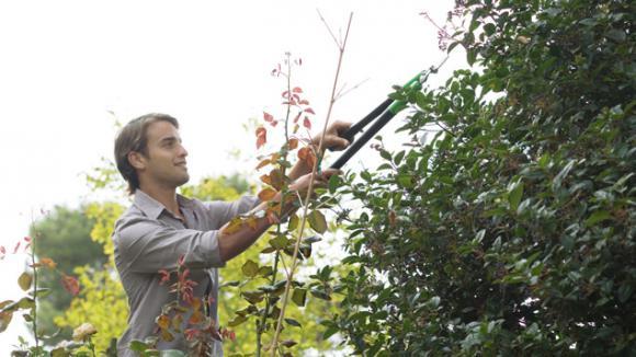 voisinage : qui doit couper les branches ?