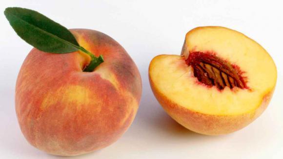 Transformer un noyau de p che en arbre fruitier - Noyaux de peches concasses ...