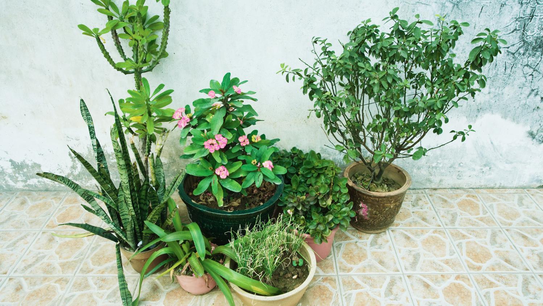 L 39 hiver les plantes grasses n 39 aiment pas l 39 eau for Plante en hiver