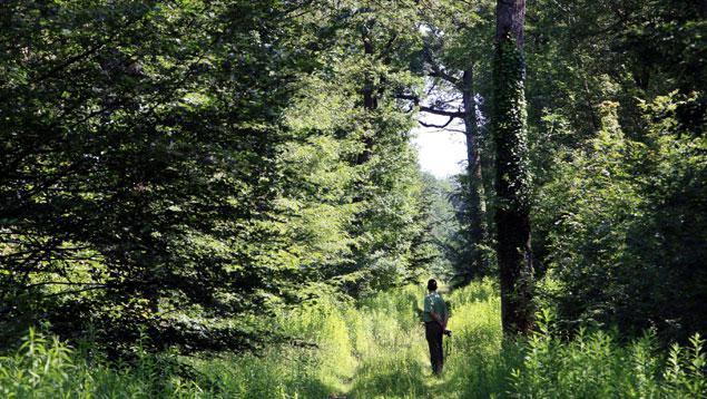 Le bois et nos for u00eats # Fiscalité Bois Et Forêts