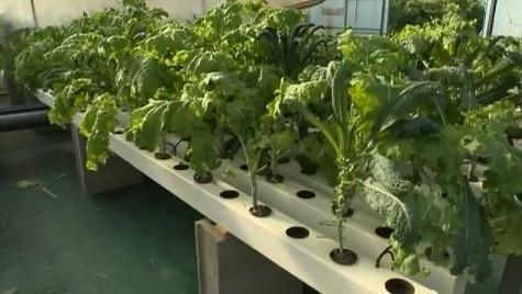 Jardinage des potagers sans terre for Heure de jardinage