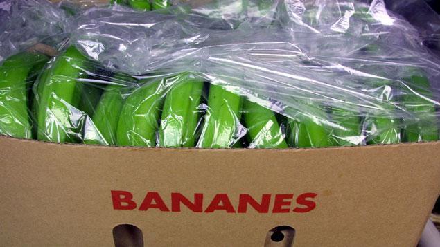 80 kilos de coca ne retrouv s dans des cartons de bananes auchan. Black Bedroom Furniture Sets. Home Design Ideas