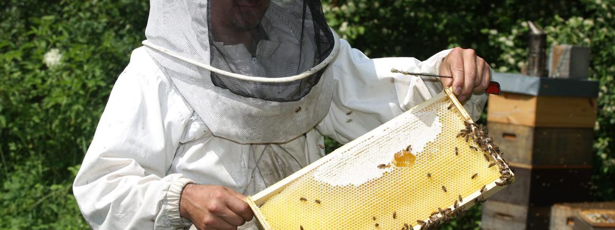 apiculteur et agriculteur
