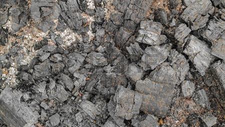 La cendre de bois un bon engrais naturel for Cendre de bois dans le jardin