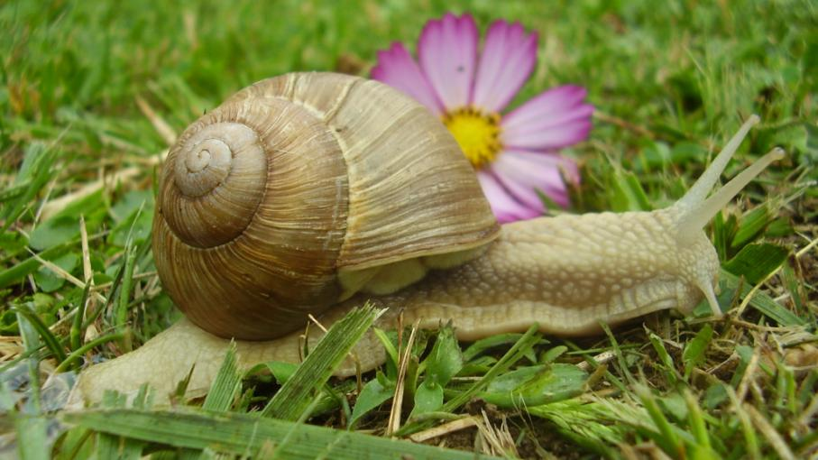 Au jardin les escargots sont de retour for Au jardin info