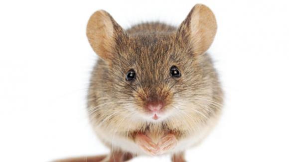 La dr le d 39 histoire de la petite souris qui n 39 existait pas marcel - L histoire de la souris ...