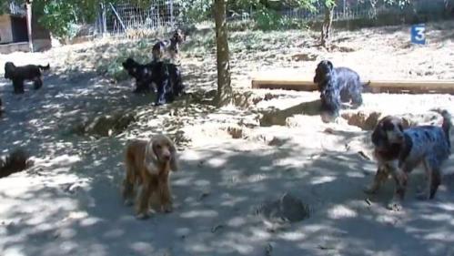 VIDEO. Plus de 120 chiens récupérés dans un élevage illégal de Haute-Vienne