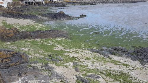 """""""Mon député"""" : les algues vertes, une plaie pour les habitants du Finistère"""