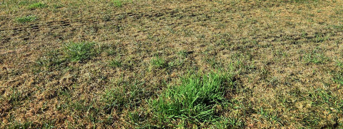Pythium pourquoi les terrains de l1 font piti - Preparer son terrain avant pelouse ...