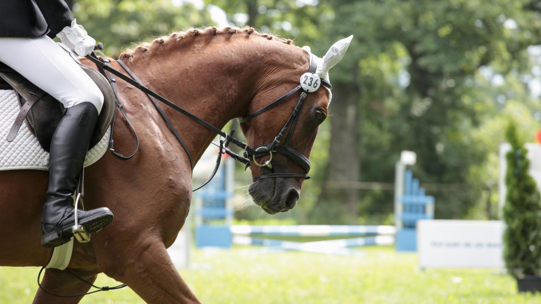 M moire d 39 cran le cheval une passion fran aise - Tchoupi et le cheval ...