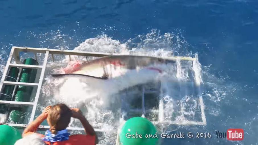 video un plongeur se retrouve coinc dans une cage avec un requin. Black Bedroom Furniture Sets. Home Design Ideas