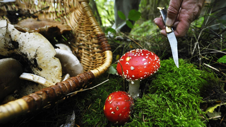 Champignons comment bien les cueillir - Champignons secs comment les cuisiner ...