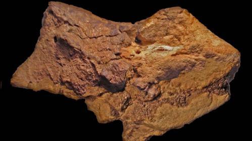 Un cerveau fossilisé de dinosaure, vieux de 133 millions d'années, identifié au Royaume-Uni