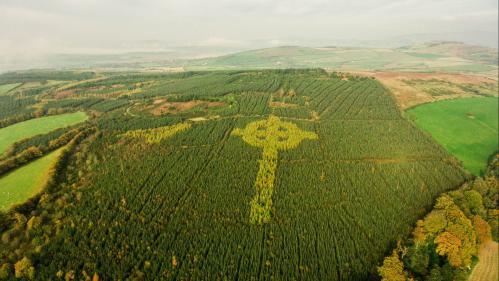 VIDEO. Irlande : il plante des arbres pour dessiner une croix celtique dans une forêt