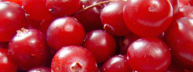 Infections urinaires : aucune preuve de l'intérêt du cranberry