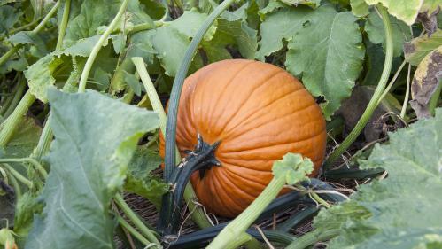 Mémoire d'écran : potagers, le jardinage à la française