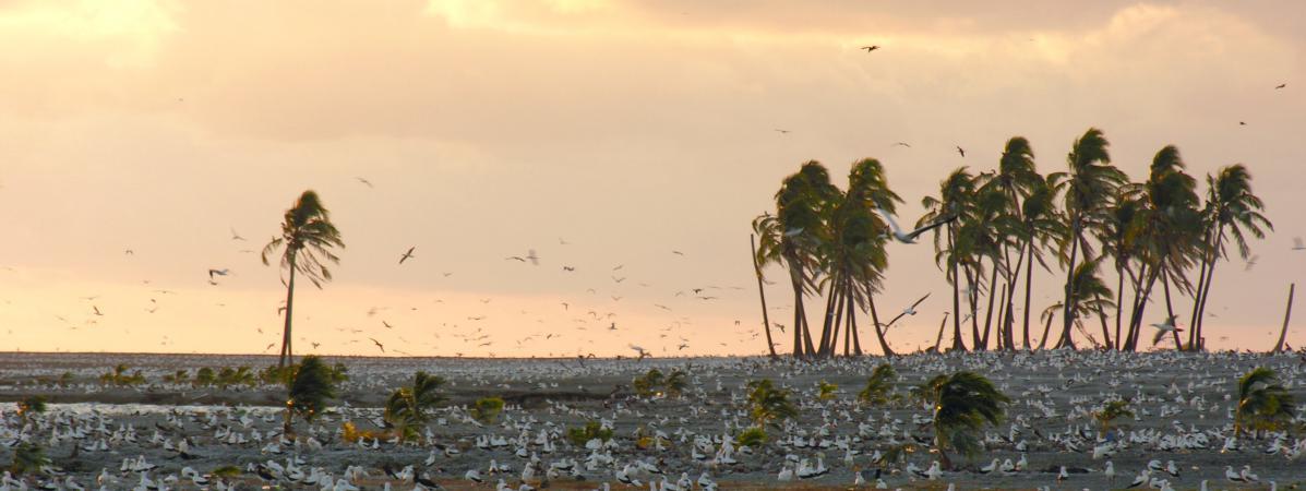 L\'île de Clipperton, dans le Pacifique, en 2005, lors d\'une expédition menée par l\'explorateur Jean-Louis Etienne.