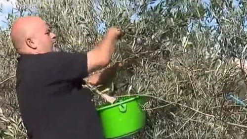 Olives : l'Argoudeil, une huile d'exception
