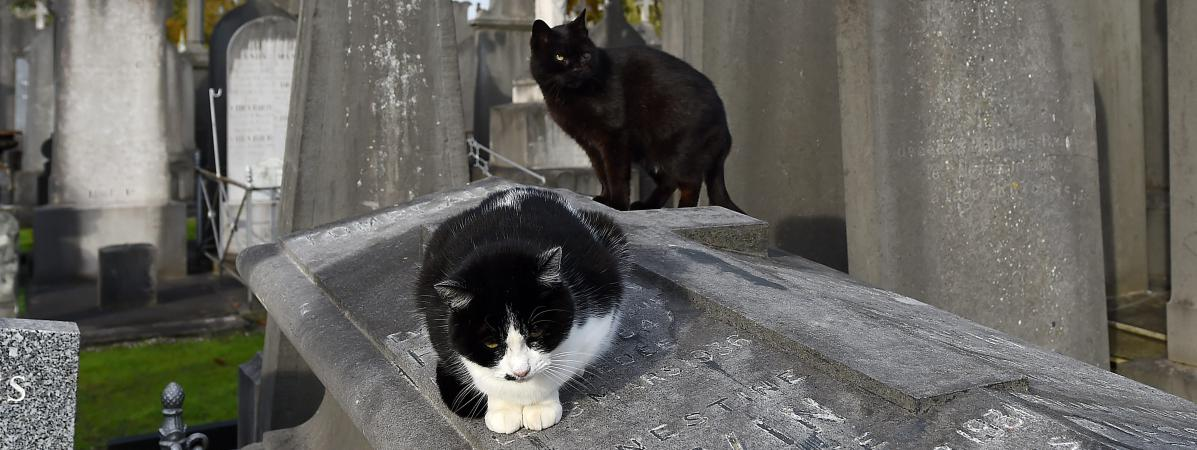 Chats errants dans un cimetière (photo d\'illustration)