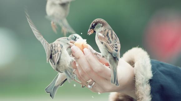 Aider les animaux auxiliaires du jardinier à passer l'hiver