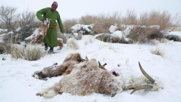 """Résultat de recherche d'images pour """"mongolie  troupeaux décimés dzud"""""""