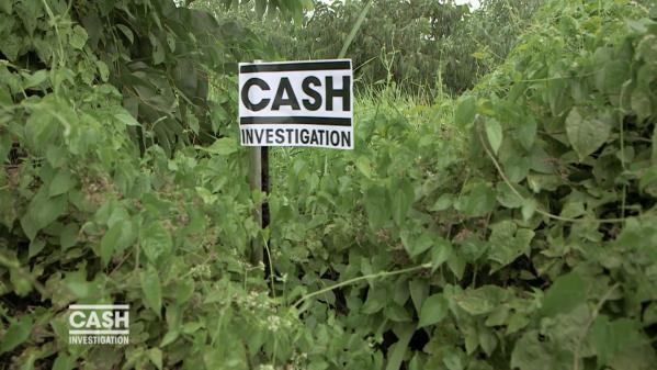 """VIDEO. Razzia sur le bois : """"Cash Investigation""""... en bref"""