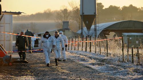 Grippe aviaire : 120 millions d'euros de pertes pour la filière foie gras