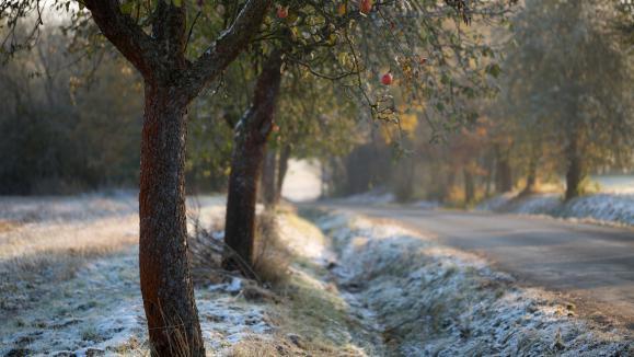 Jardin traitements d 39 hiver des arbres fruitiers - Quand traiter les arbres fruitiers ...