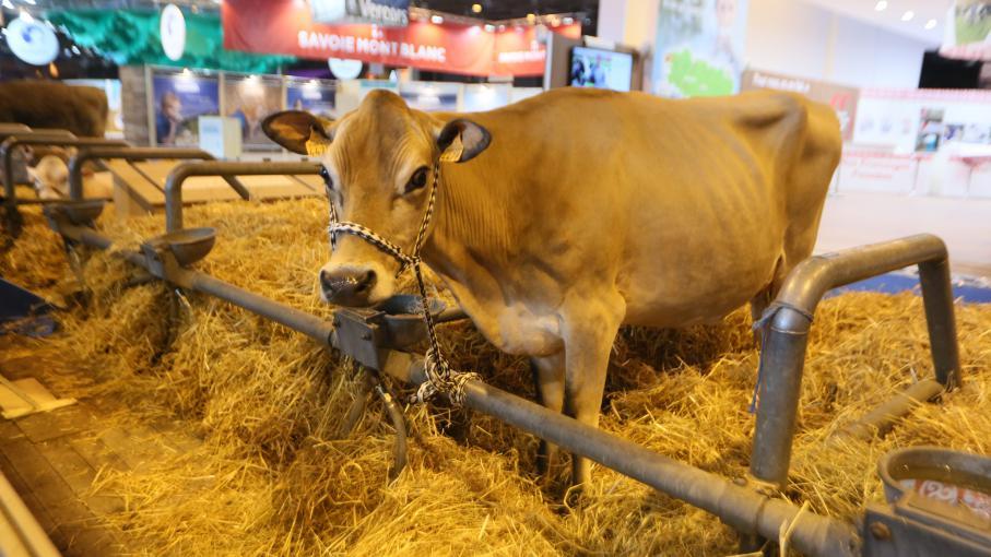 Salon de l 39 agriculture d couvrir les animaux et de for Porte de champerret salon des saveurs