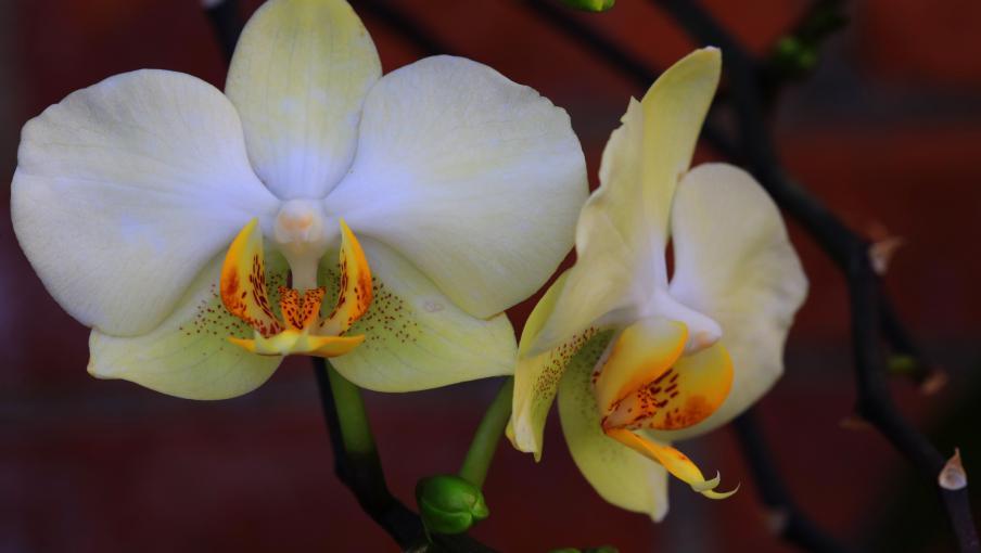 jardin les orchid es. Black Bedroom Furniture Sets. Home Design Ideas