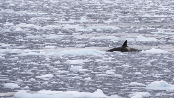 Réchauffement des océans : quelles conséquences ?