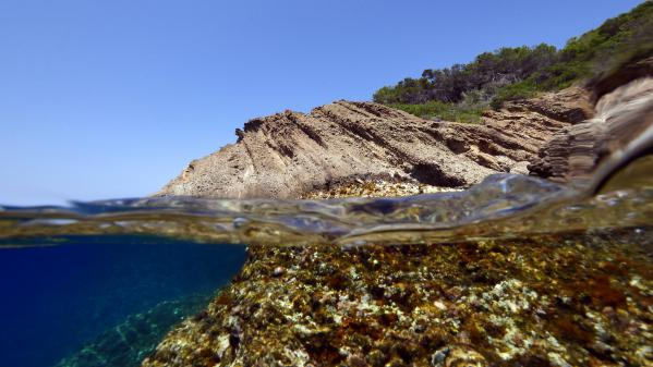 En Méditerranée, le changement climatique est plus nocif que la pêche