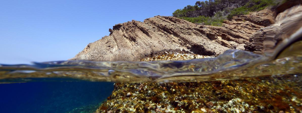 Les petits fonds rocheux de la mer Méditerranée abritent la plus grande concentration de vie en mer.