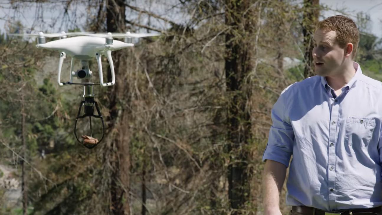 Professeur fac tieux gnome de jardin connect et drone for Jardin connecte