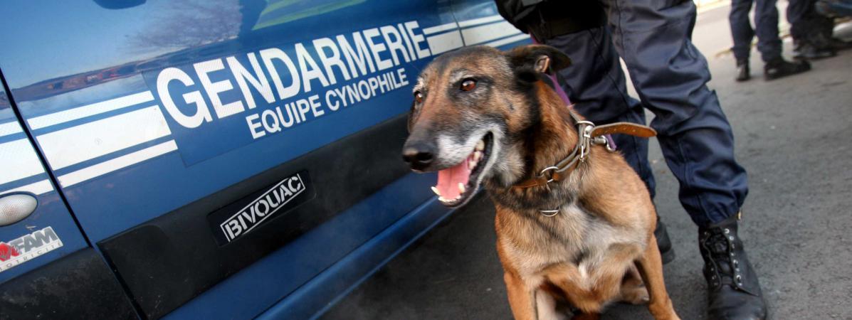 Indre-et-Loire : 16 personnes placées en garde à vue après