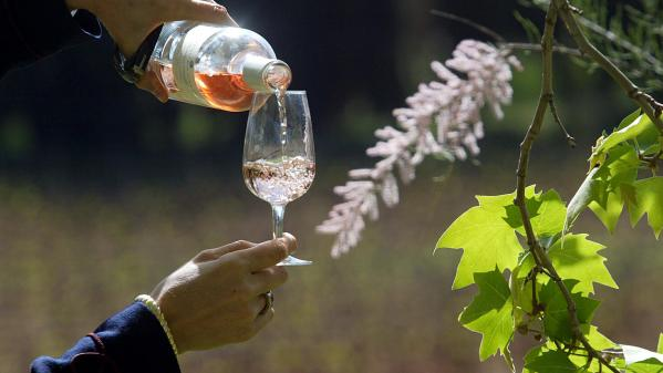 Alsace : découverte de la plus vieille route des vins