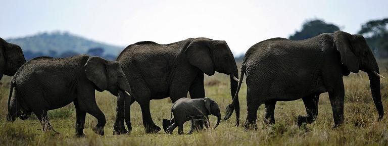 Tourisme : un safari éco-responsable en Tanzanie